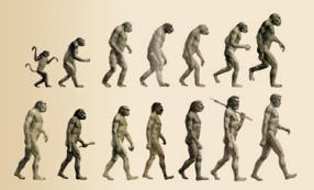 Evolución del hombre (Desarrollo de los homínidos)