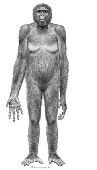 Representación del 'Ardipithecus ramidus'- SCIENCE
